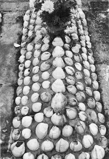 Grave decorated with seashells